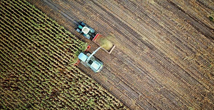 Hale namiotowe dla rolnictwa